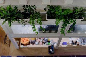 planten op de bar voor sfeer en warmte